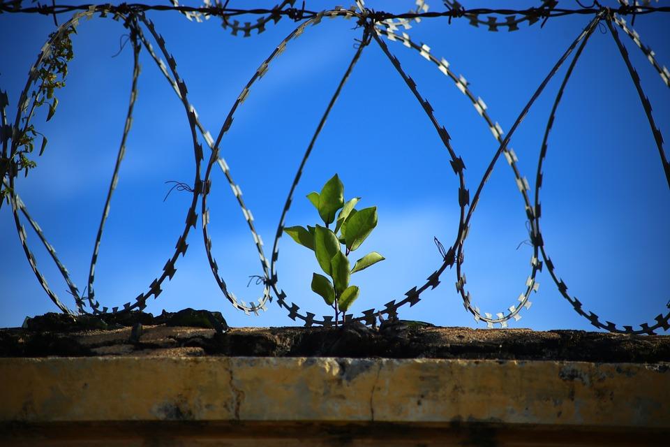 więzienie w szwecji